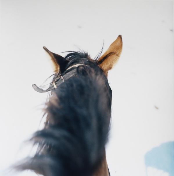 horse_snow.jpeg
